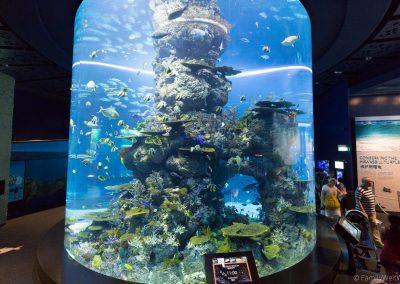 S.E.A. Aquarium, Singapur