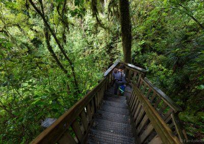 Ruakuri Bush Walk, Waitomo, Neuseeland