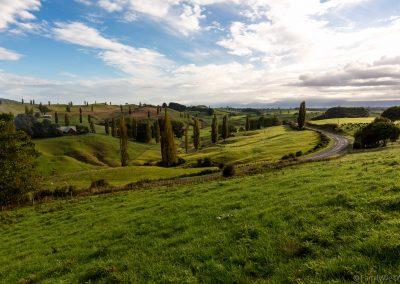 Landschaft bei Matamata, Neuseeland