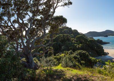 Maitai Bay, Northland, Neuseeland